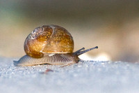 Moving Along at a Snail's Pace